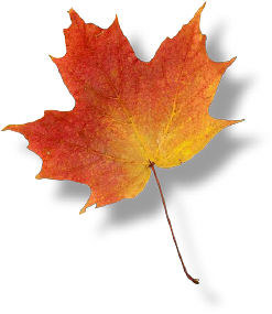 Photo of a maple leaf